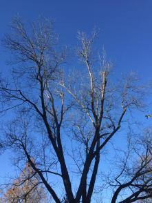 Pecan tree - Clevedale (1-23-18)
