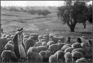 shepherd and sheep2