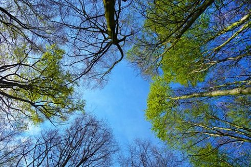 trees (looking up)