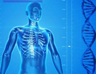 human body (skeleton)